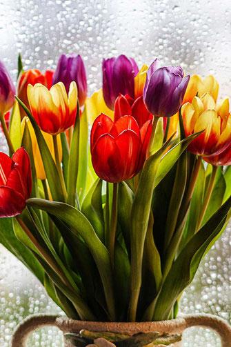 Bunte Tulpen am Regenfenster © Jutta M. Jenning ♦ mjpics.de