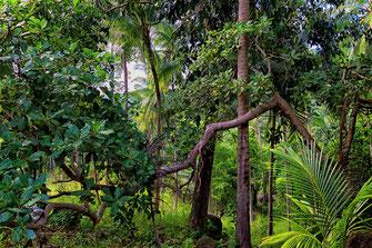 Dschungel im Than Sadet Nationalpark auf Koh Phanghan
