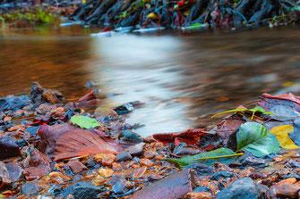 Bunte Herbstblätter am Bachufer ♦ Langzeitbelichtung © Jutta M. Jenning www.mjpics.de