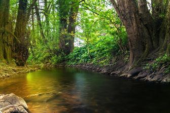 Am Ufer eines kleinen Baches sitzen und die Stille genießen ♦ © www.mjpics.de
