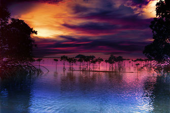 Sonnenuntergang mit Mangroven in Wok Tum Koh Phangan