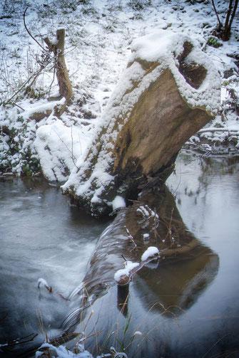 Baumstumpf im Wasser im Winter