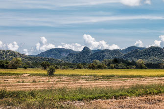 Reisfeld auf Langkawi in Malaysia © Jutta M. Jenning