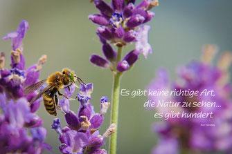 """Spruchkarte Lavendel-Wildbiene """"Es gibt keine richtige Art, die Natur zu sehen. Es gibt hundert"""""""