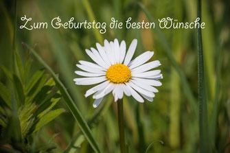 Zum Geburtstag die besten Wünsche -Grusskarte Gänseblümchen