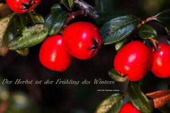 fruehling-des-winters-herbst-feuerdorn-spruchkarte