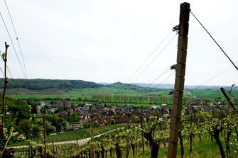 Weinberg, Untergesingen, Ammertal, Wurmlinger Kapelle, DRK,