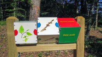 cubes à tourner, panneaux pédagogiques, interprétation, illustration, nature, foret, bois, animaux