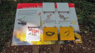 panneau pédagogique, panneaux d'interprétation, animaux, forêt, encart ludique, illustration, illustrateur, nature, biodiversité