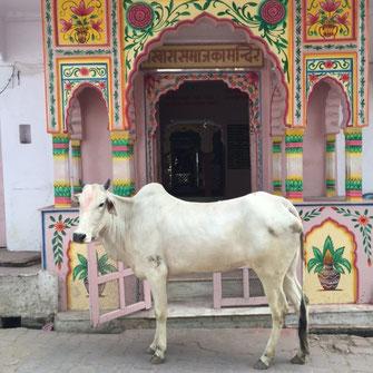 Pushkar Rajasthan Textilrundreise Indien