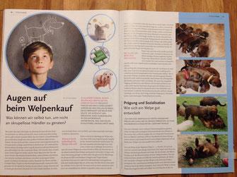 Bild: Briards von der roten Hex' im Tierschutz-Magazin