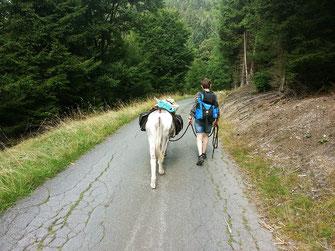 Eselwanderungen in Bad Berleburg, Naturpark Rothaargebirge-Sauerland