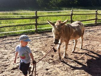 Tiergestützte Interventionen: Therapie-Maßnahmen mit Eseln in Bad Berleburg, Naturpark Sauerland-Rothaargebirge