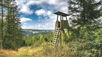Wald verkaufen, Waldholz Immobilien