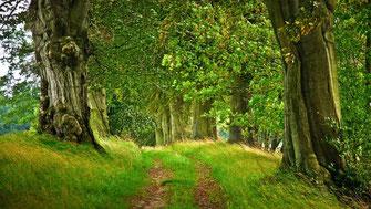 Wald kaufen, Waldholz Land Acquisition