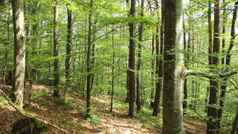 Waldpacht, Wald pachten, Waldholz Immobilien