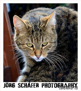 digitale-fotografie-bildbearbeitung-tiere-katzen-joerg-schaefer-darmstadt-fotografie-artwork.de