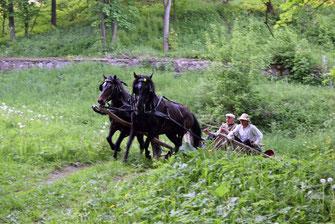 Žemaitukų kinkiniais – į Bėk bėk žirgeli šventę - 1 dalis - Stalnionytė