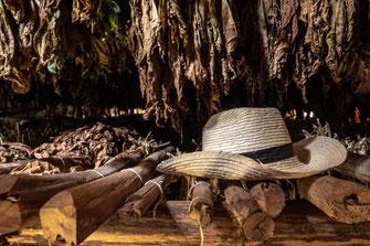Tabako namelis Vinjaleso slėnyje Kuboje
