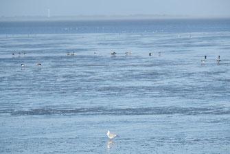 Ein Muss während Ihres Nordseeurlaubs im Ferienhaus Nordseeufer - Wattwanderung