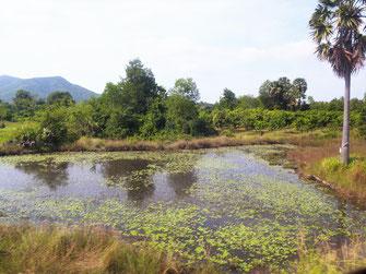 Der Blick aus dem Fenster ist jederzeit wundervoll, Region Kep, Kambodscha (Foto Jörg Schwarz)