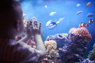 Aquarium mit Fischen in Aachener Arztpraxis. Aquarienpflege in Aachen