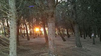 agri campeggio a torre dell'orso pineta