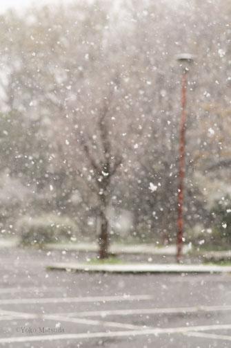 松田洋子写真 雪の景色