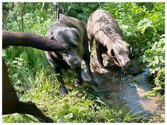 Entdeckungstouren im Wald, in duftenden Wiesen und vor allem Plantschen im Wasser. .