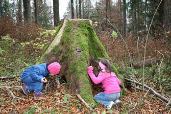 Versteckspielen (Foto: Dieter Hopf, LBV-Bildarchiv)
