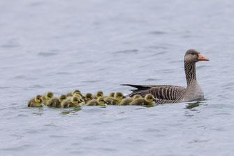 Hosenbiene (Foto: Christoph Bosch, LBV-Bildarchiv)