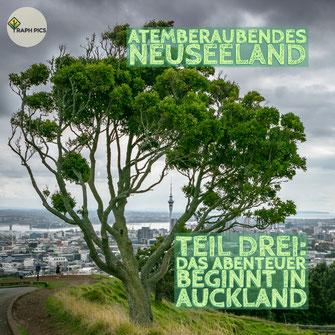 Neuseeland Blog Teil Drei