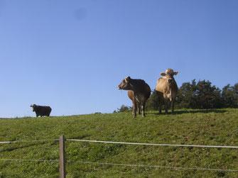Eindrücke Schafmandl Landwirtschaft 5