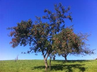 Eindrücke Schafmandl Landwirtschaft 4