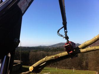 Eindrücke Schafmandl Forstwirtschaft 3