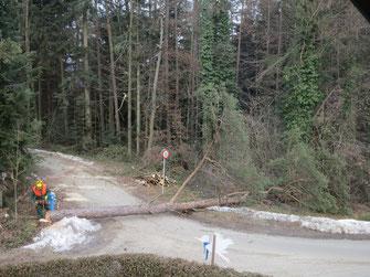 Schafmandl Forstwirtschaft seit 1779 in Mariatrost