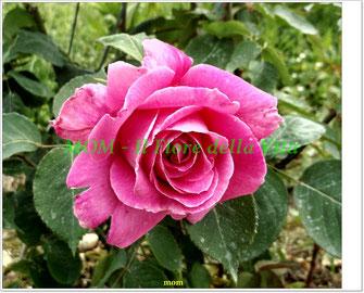 Fotografie di fiori