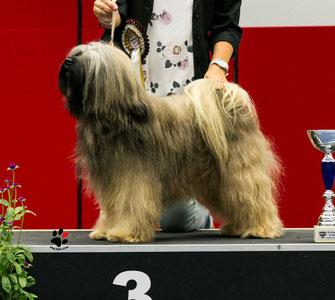 Multi Champion Yarmothang Chen-po Samye *11.11.2011*