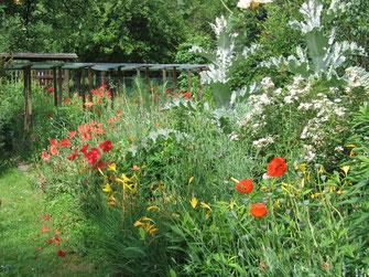 Blühende Gartenhecke - LBV-Bildarchiv Foto: Thomas Staab
