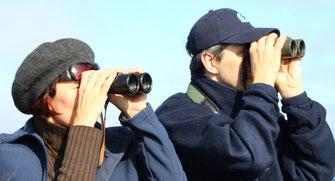 Vogelbeobachter - LBV-Bildarchiv Foto: Peter Bria
