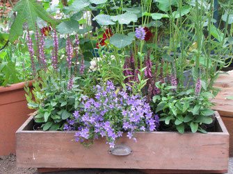 Blumenkasten für den Balkon - LBV-Bildarchiv Foto: Birgit Helbig