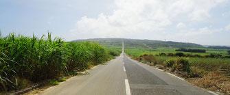 喜界島 サトウキビ畑の一本道