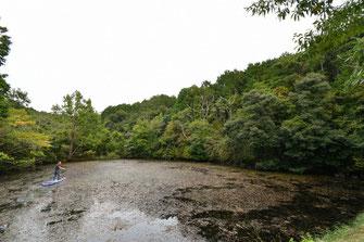 ヒシや水草の池にサーフボート