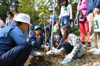 3班に分かれて子どもたちがヤマボウシを植樹