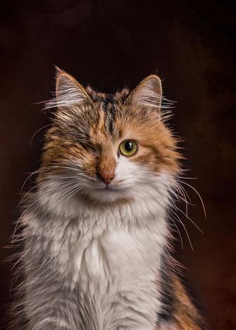 Epische Katzenportraits selbst fotografieren mit Katze Truddy von Tobias Gawrisch (Xplor Creativity)
