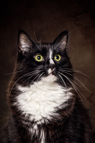 Epische Katzenportraits selbst fotografieren mit Kater Mojo von Tobias Gawrisch (Xplor Creativity)