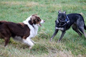 Livie kennt Cooper, der auf sie zugesprintet kommt, noch nicht. Sie ist gerade im Begriff sich abzuwenden und dreht Cooper die Flanke zu.