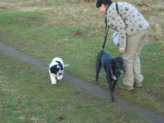 Ginger ist als Welpe noch sehr unsicher und macht lieber einen großen Bogen um Anika und Mandy.