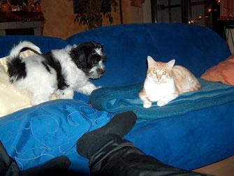Ginger kennt Balthasar zwar bereits seit einigen Tagen und hat sich mit ihm angefreundet, trotzdem ist der Respekt noch groß und sie meidet die frontale Annäherung.