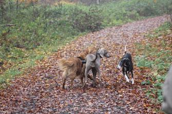 Die Hündin aus dem Tierschutz ist sich sehr unsicher und läuft im Bogen an Finn und Éowyn vorbei.